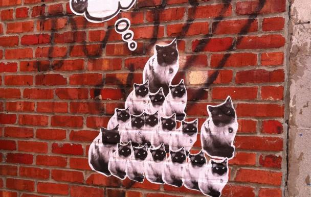 Des chats à l'UdeM ?
