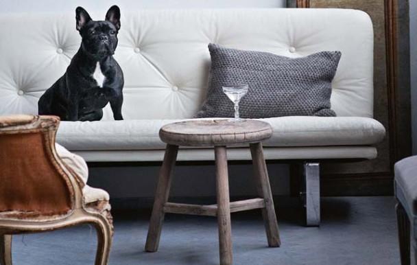 Écosse : Des chiens choisissent les futurs vétérinaires