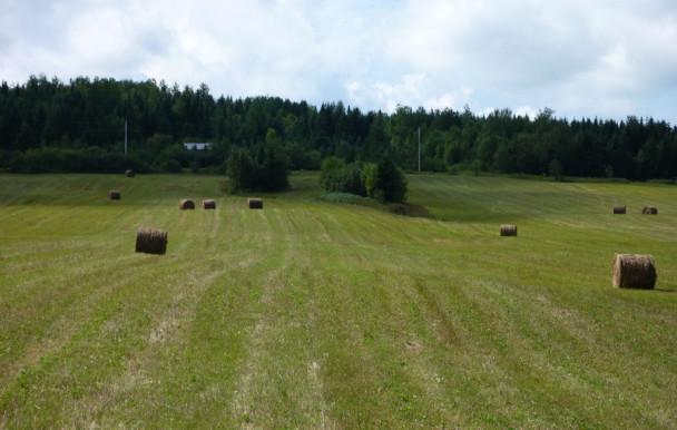 Le cinéma de l'espace rural