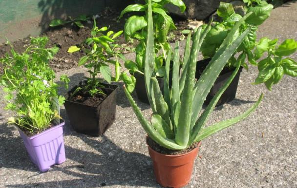 Échange de plantes cette semaine à l'UdeM