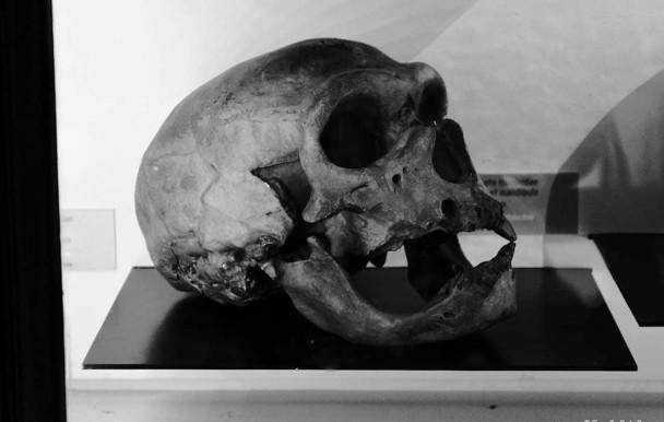 États-Unis : 1 000 squelettes sous l'Université du Mississippi
