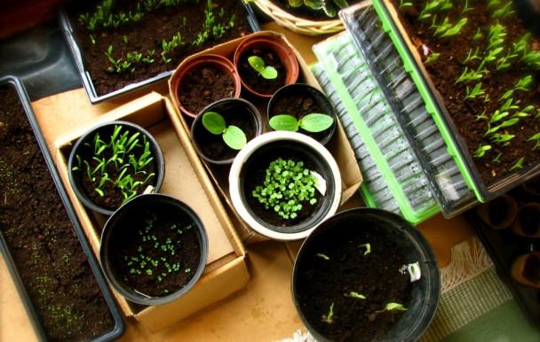 Grande vente de semis à l'Université Concordia