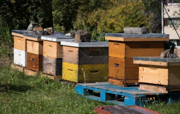 Une passion miellée