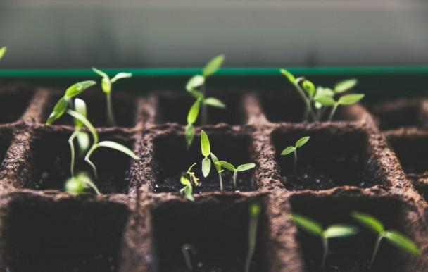 Emprunter des semences pour son jardin, à la bibliothèque