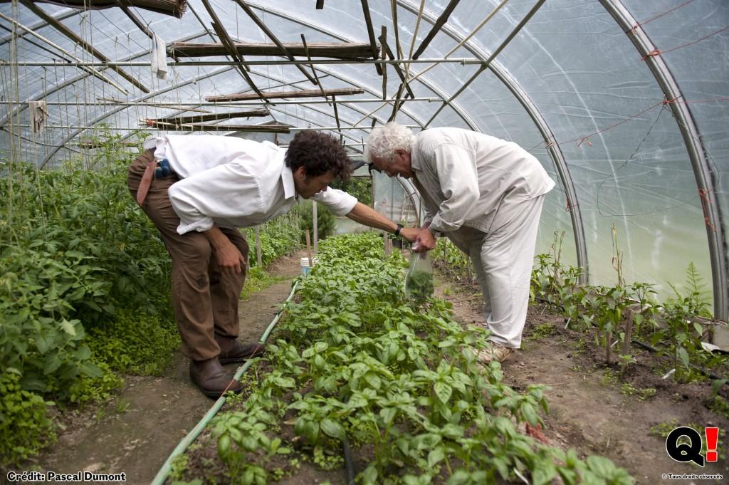 Jordan aide Pete à ramasser les légumes ou encore, comme ici, à désherber. (Crédit photo : Pascal Dumont)