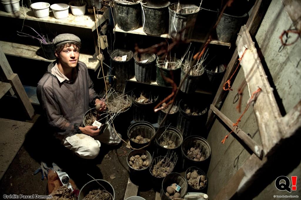 En attendant d'e?tre replante?s l'anne?e prochaine, les tubercules de pommes de terre sont conserve?s au frais et a? l'abri de la lumie?re dans le cellier. (Crédit photo : Pascal Dumont)