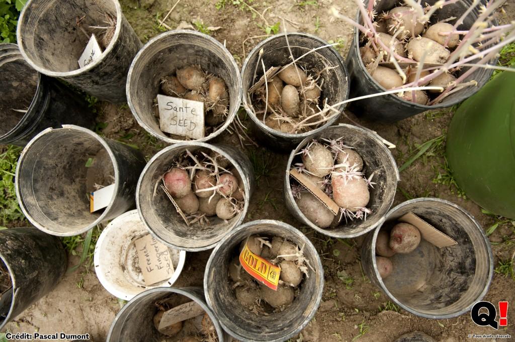 Pete est un collectionneur de semences traditionnelles utilisées depuis des généra- tions. Il cultive plus de 70 varie?te?s de pommes de terre. (Crédit photo : Pascal Dumont)