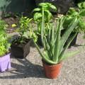 L'activité d'échange de plantes est organisée depuis deux ans. Photo : Flickr/Julie C.