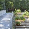 Jardin des gradins, créé l'an dernier sur le terrain de la Faculté de l'aménagement. Photo : courtoisie SAUFA.