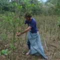 L'étudiant Romain Busnel participe à la récolte de la feuille de coca pour mieux s'intégrer. Crédit photo: Courtoisie Romain Busnel.