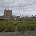 Le site du campus MIL, où des jardins éphémères sont installés pendant la saison estivale. (Crédits: Isabelle Bergeron)