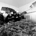 Selon les experts, le Canada devra surveiller le prix fixé et le taux de THC pour bien se substituer au marché noir. Crédit photo : Flickr|West Midlands