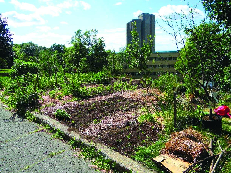 Le jardin des résidences est l'une des huit installations de P.A.U.S.E. lors de l'été 2016. Crédit photo : Page Facebook P.A.U.S.E. -Production Agricole Urbaine Soutenable et Écologique.