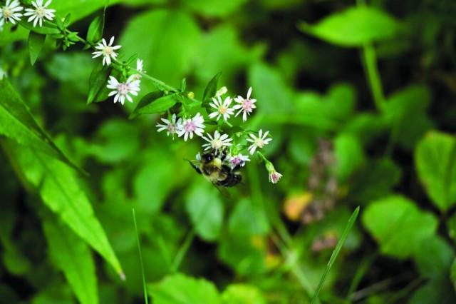 Quatre ruches sont installées sur le campus de l'UdeM. Elles permettent à l'Unité du développement durable (UDD) de récolter son propre miel.