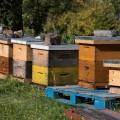 Les ruches installées sur le campus de l'UdeM. (Photo : Jèsybèle Cyr)