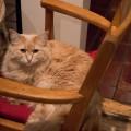 Kotchka met en relation des refuges et des familles d'accueil désireuses d'accueillir des chats en attente d'adoption. (crédit photo : Jèsybèle Cyr)