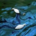 Les lacs contaminés prennent une teinte verdâtre. (Photo: Wikimedia Commons)