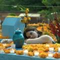 """Fanny Mallette interprète le rôle d'Estelle dans Apapacho. Ce mot náhuatl représente un concept difficilement traduisible que la réalisatrice du film a interprété comme """"une caresse pour l'âme"""". Photos : Productions du Cerf-volant."""